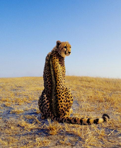 Животные от Mark Laita