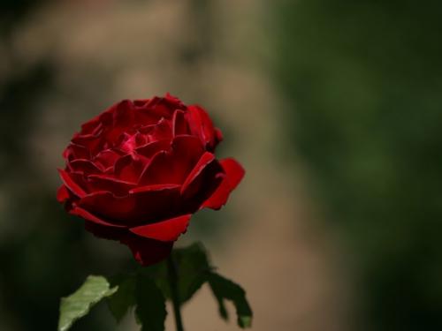 Цветочный рай (143 изображения)