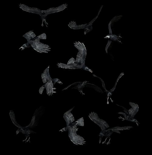 Вороны (1 фото)