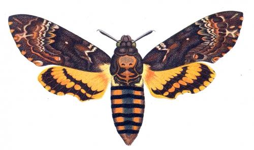 Энтомология (наука о насекомых в картинках)