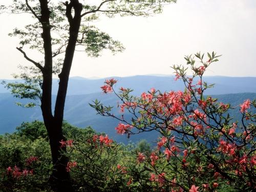 Национальные парки мира (85 фото)