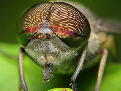 Микро Мир - фото насекомых