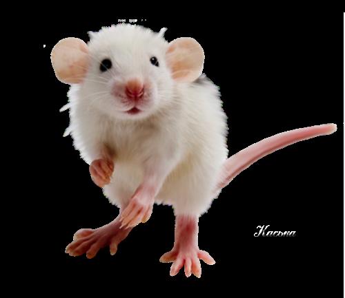 Мыши - клипарты к новому году