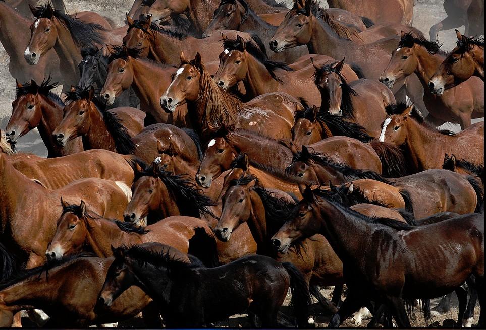 сто картинок лошадей надо выставить