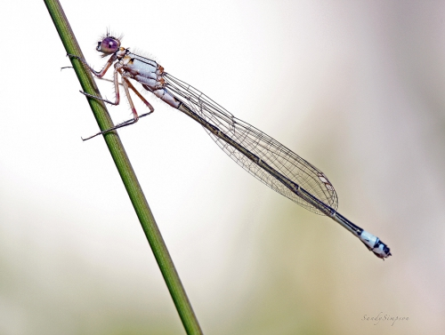 Macro Photography by Sandy Simpson (55 картинок)