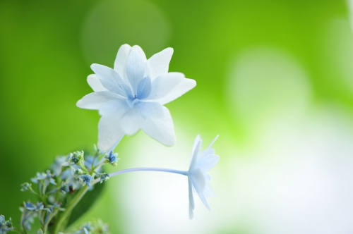 Macro Photography by Sakura (updated 01.03.2011) (50 работ)