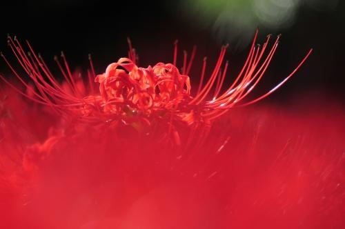 Macro Photography by Sakura (updated 01.03.2011) (50 картинок)