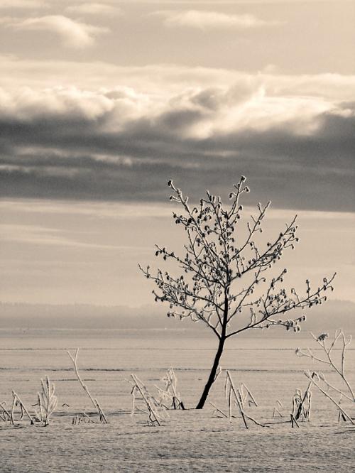 Фотограф Petri Volanen (140 картинок)