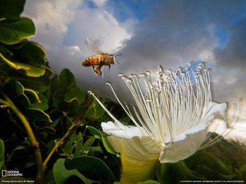 Лучшие фото National Geographic за февраль 2011 (28 картинок)