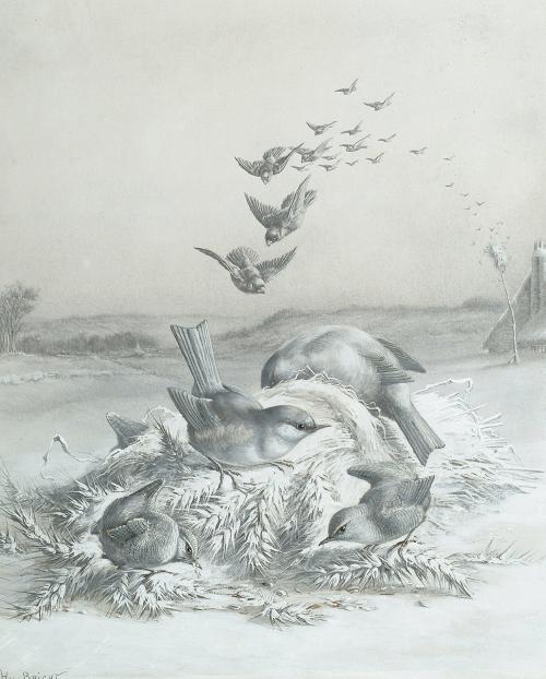 Harry Bright (British, 1846-1895) (37 картинок)