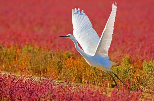 Мир в Фотографии - World In Photo 456 (60 картинок)