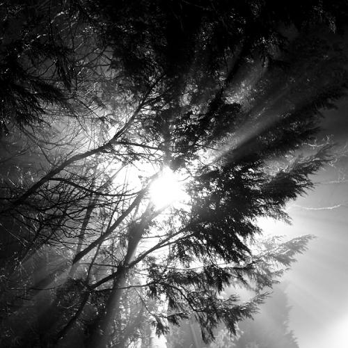 Портфолио: Adam Lack (64 картинок)