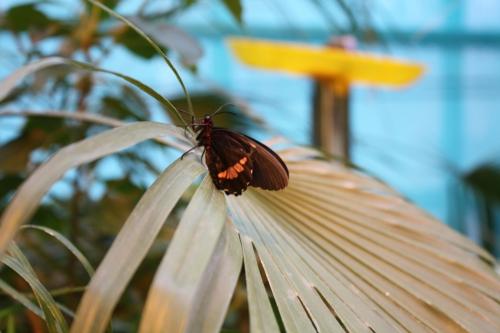 Фото - Бабочки | Photo - Butterfly (11 картинок)