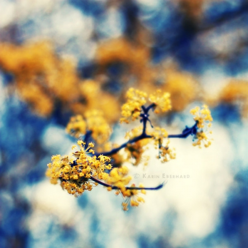 Фотоработы Karin Eberhard (Karisca) (50 картинок)