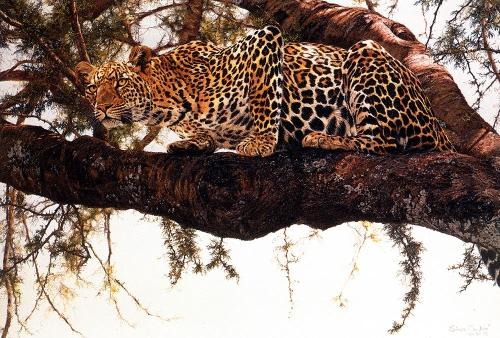 Художник Simon Combes (66 картинок)