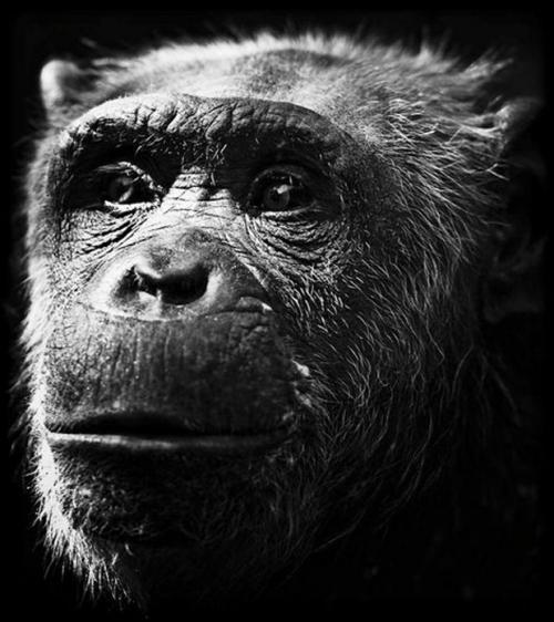 Фотограф Laurent Baheux (57 картинок)
