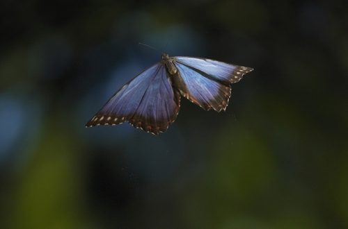 Фотограф Stephen Dalton (30 картинок)