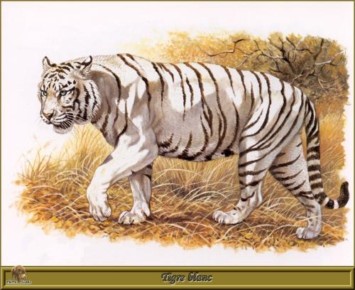 Роберт Даллет. Семейство Кошачьи | Painted Felines by Robert Dallet (152 работ)