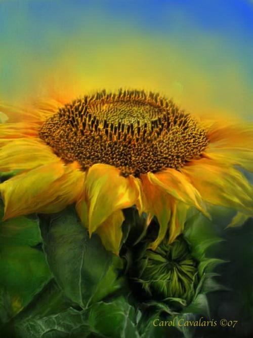 http://nevsepic.com.ua/uploads/posts/2011-05/thumbs/1306778400_www.nevsepic.com.ua_24_sunflower_pic.jpg