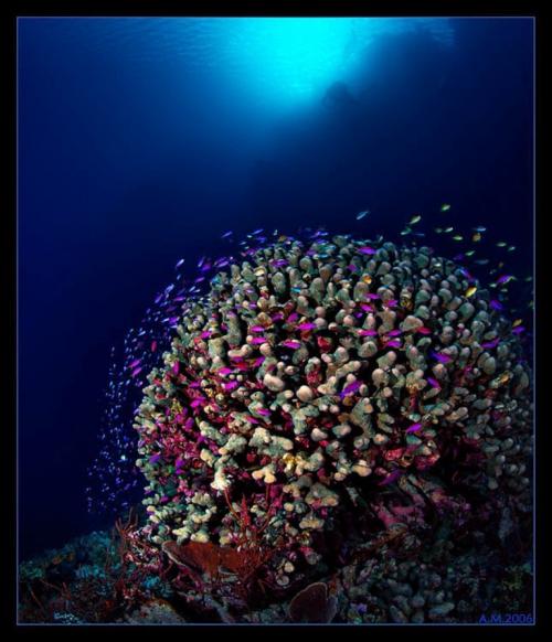 Фотограф Александр Мариничев. Подводный мир. 3 часть (124 фото)