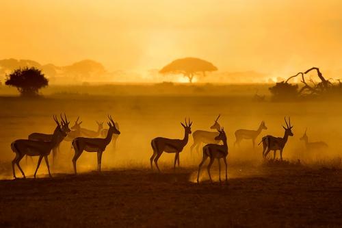Мир в Фотографии - World In Photo 471 (60 фото)