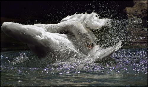 Необыкновенные кадры фотоохоты «Лучший кадр». 12 часть. | «Best Shot» (115 фото)
