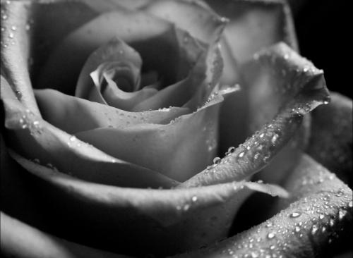Flowers b&w (7 фото)