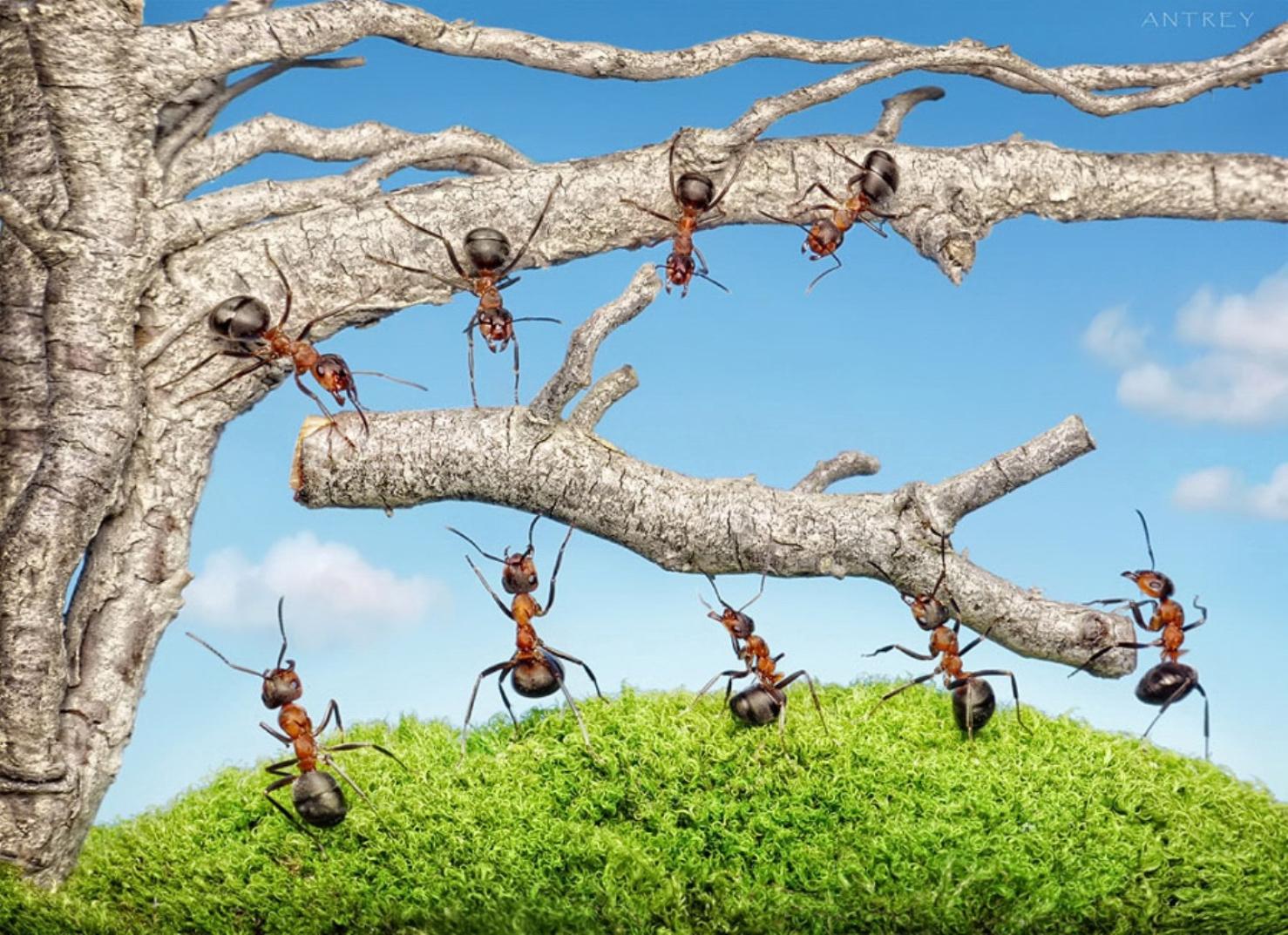 Муравей из дерева из бревна фото