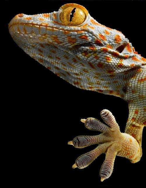 Robert Clark....Animals. (16 фото)