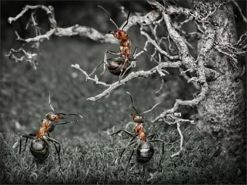 Фотограф Андрей Павлов (Антрей) «Муравьиные истории» (52 работ)
