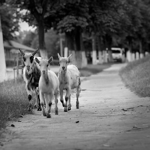 Фотограф Edgar Zhukovsky (25 фото)