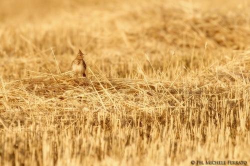 Фотограф Michele Ferrato (70 фото)