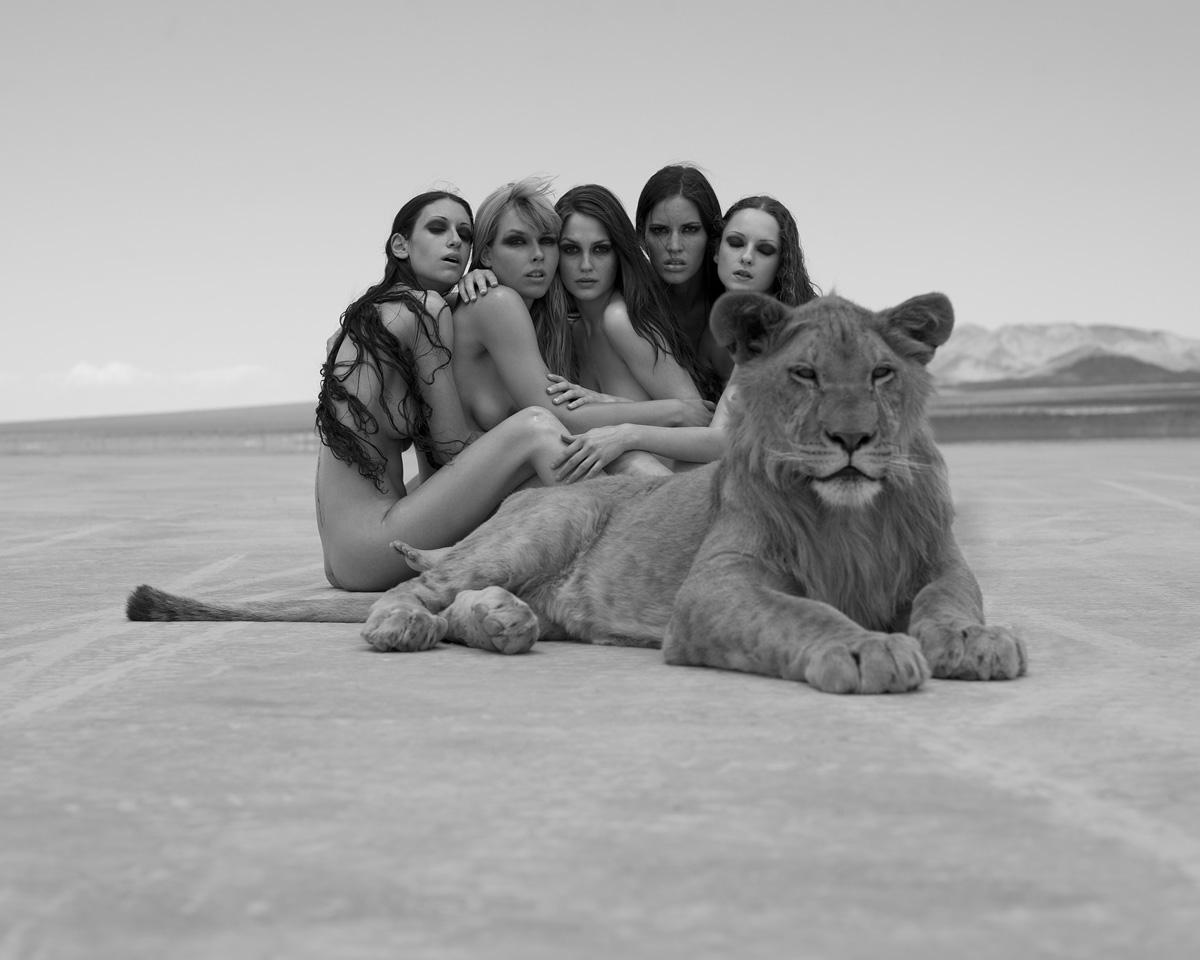 Эротика дикие кошки 16 фотография