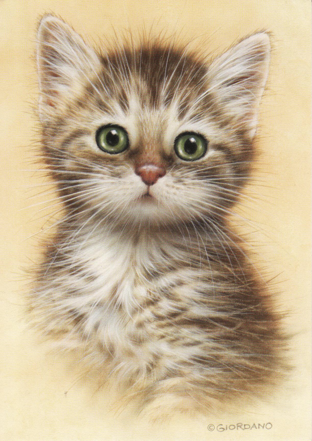 Кошки для открытки
