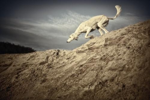 Фотограф Alyat (60 фото)