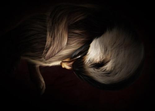 Животные в утробе матери (35 работ)