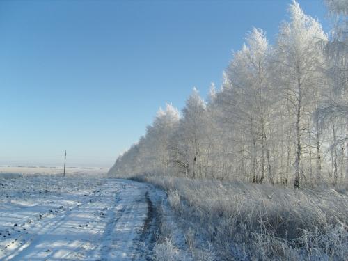Зимние фотографии (31 фото)