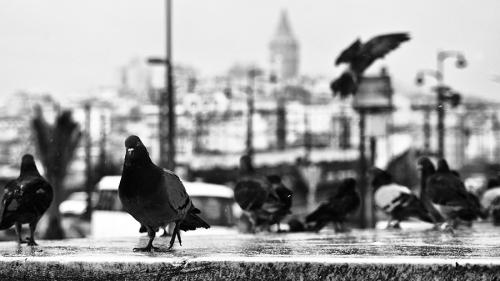 Фотограф Alexandre Buisse (63 фото)