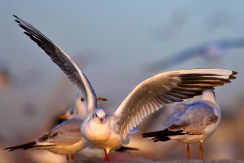 Дикая природа глазами фотографа Сухи Дербента | Suha Derbent (220 фото)