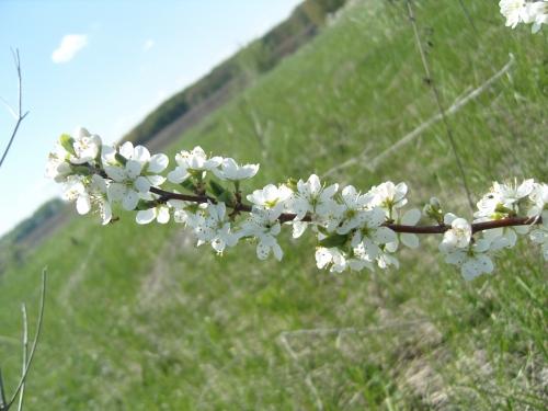 """Коллекция фотографий """"Весна 2011"""" (16 фото)"""