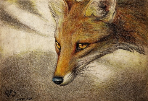 Рисованные лисы (23 работ)