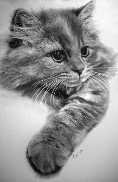 Pol Lung. Кошачьи зарисовки… (13 фото)