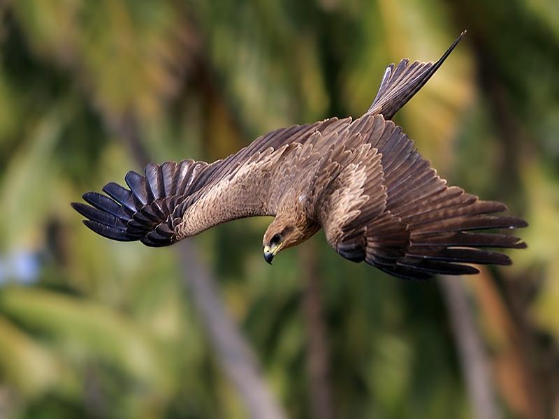 Птица напоротая на щип картинка
