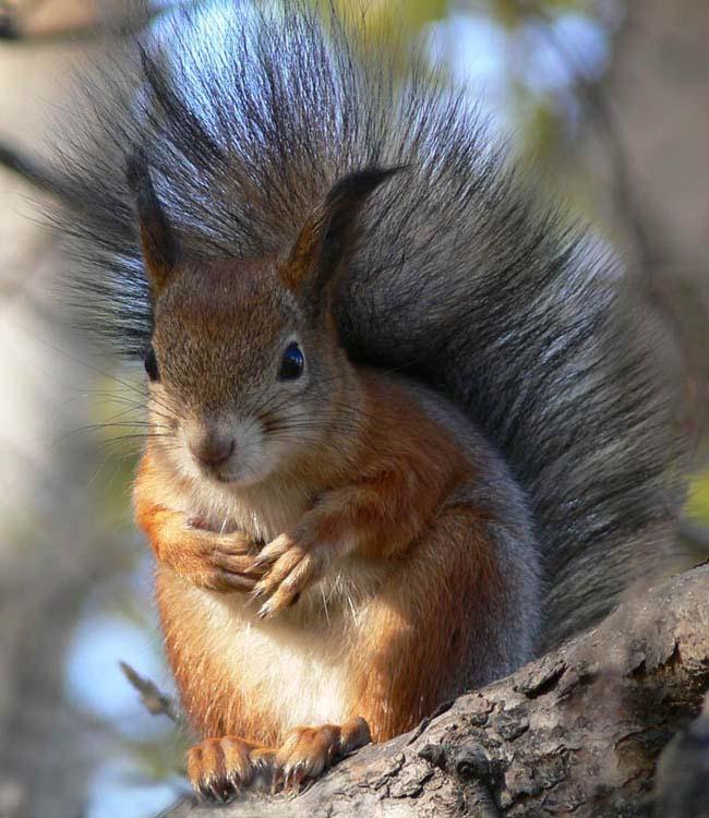Картинки удивительных животных слышали существовании