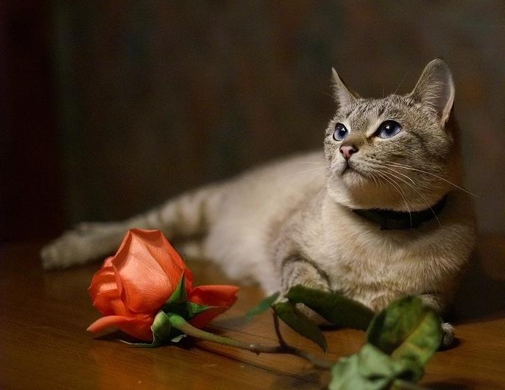Открытки кошки красивые