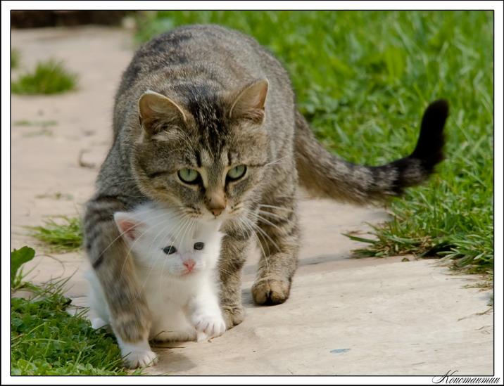 """Окружающий мир через фотообъектив - Домашняя кошка (Domestic Cat) (192 фото) """" Страница 3 """" Картины, художники, фотографы на Nev"""