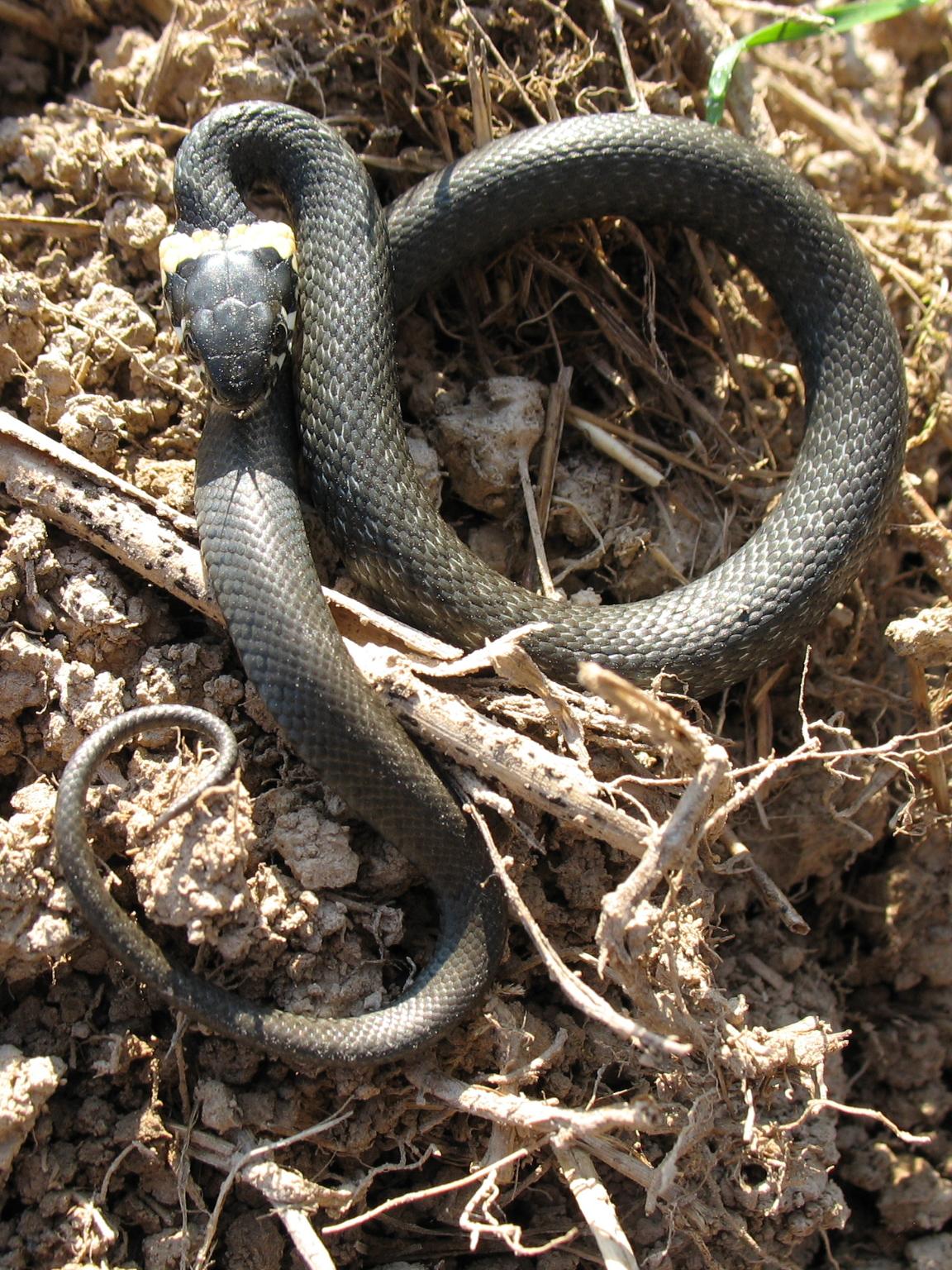 других змеи в брянской области фото политики