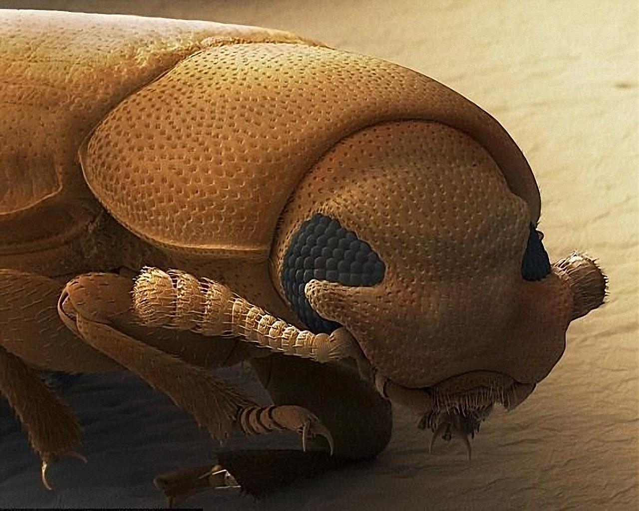 лучше будет личинка мухи фото под микроскопом для обратной связи