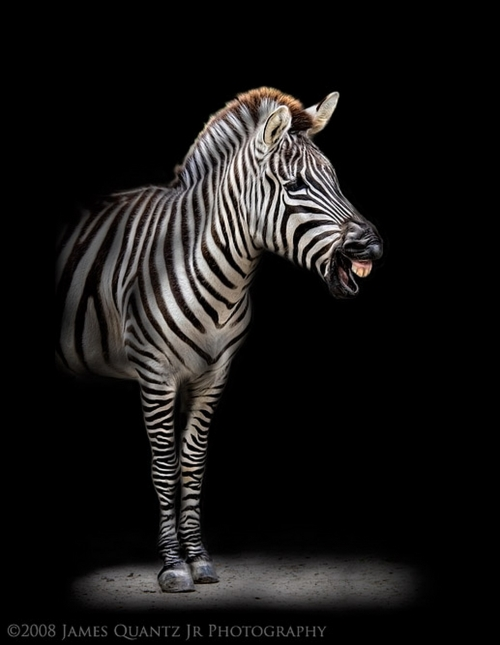 Photoworks James Quantz Jr. Animals (17 фото)