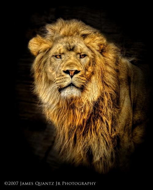 Photoworks James Quantz Jr. Animals (17 фото)